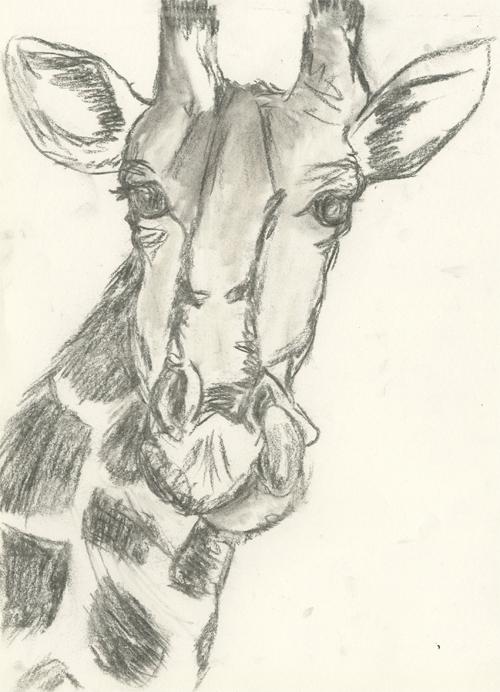 girafe-fusain