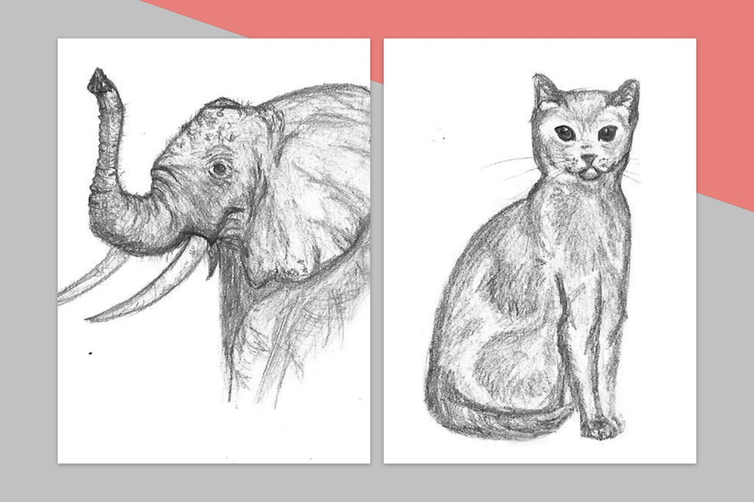 chat_elephant_croquis